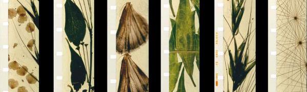 Mothlight (1963)